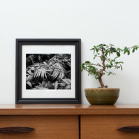 Black and white Tropical Garden photographic print series 10