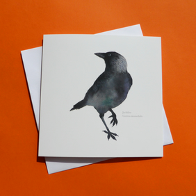 Jackdaw square card