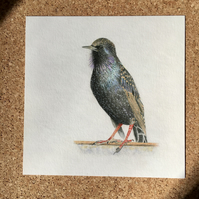 Starling giclee print