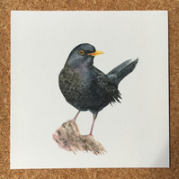 Watercolour blackbird giclée print
