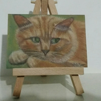 Aceo Animal Ginger Cat Original Pastel Painting