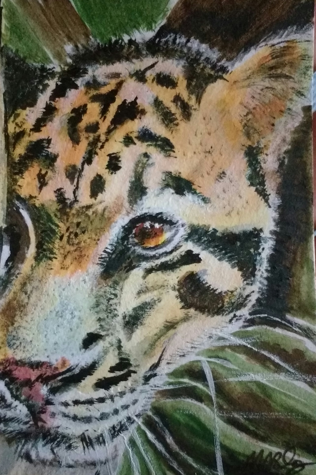 Aceo Animal Clouded Leopard Wildlife Original Oil Painting