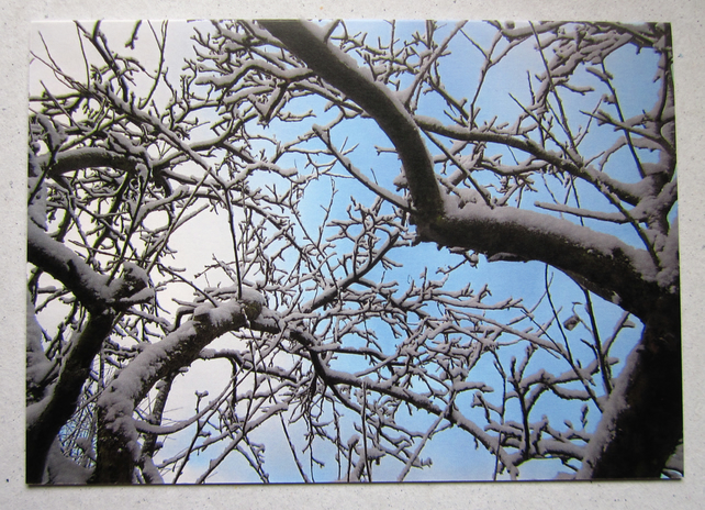 SALE - Two Snowy Apple Tree Branches Christmas Cards