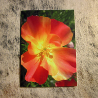 Vibrant Orange Wildflower Poppy Greetings Card