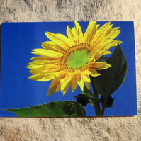 Bright Yellow Sunflower Greetings Card