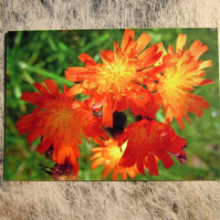 Bright Orange Wildflowers Greetings Card