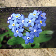 Charming Blue Forget-me-not Flower Heart Valentines Card
