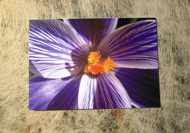 Bold and Bright Crocus Card
