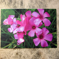 Pretty Pink Flowers Valentines Card