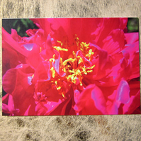 Bright Pink Peony Flower Valentines Card