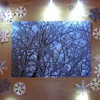 Snowy Woodland Hedge Christmas Card