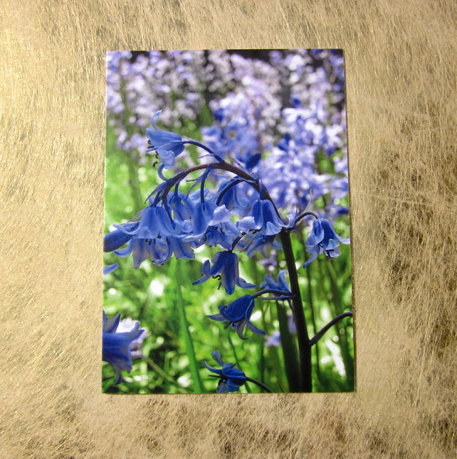 Beautiful Bluebell Greetings Card