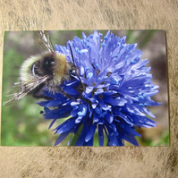 Bee and Blue Wildflower Birthday Card