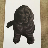 Cocker Spaniel Pup blank greeting card