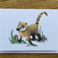 Coati blank greeting card