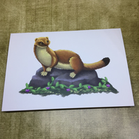 Stoat post card