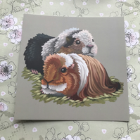 Guinea Pigs square post card