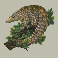 Pangolin Limited Edition Art Print