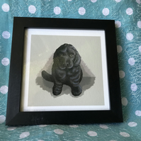 Black Cocker Spaniel Puppy limited edition signed print