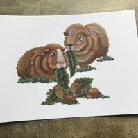 Guinea Pig post card