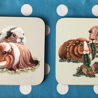 A pair of Guinea Pigs Square Coasters