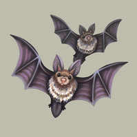 Bats Limited Edition Art Print