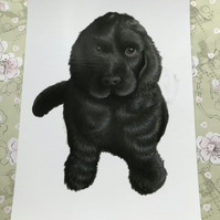 Cocker Spaniel Pup post card