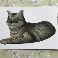 Egyptian Mau Cat Post Card