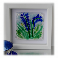 Fused Glass Bluebell Picture Box Framed 001 Grape Hyacinth