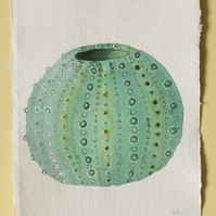 Original watercolour green sea urchin shell illustration