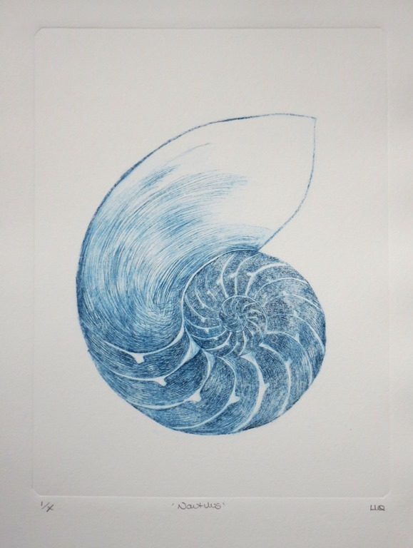 Chambered nautilus cross section sea shell original drypoint etching