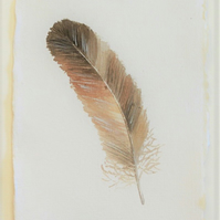 Original watercolour painting feather study in brown