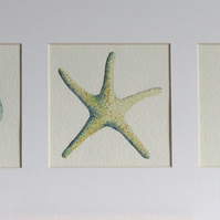 Sea urchin, sand dollar and starfish watercolour triptych painting illustration