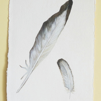 Original watercolour illustration of a grey feather