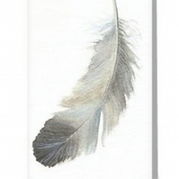 Feather blank greeting card from a watercolour painting