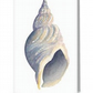 Sea shell whelk blank greeting card from an original painting