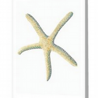 Starfish design blank greeting card