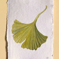 Gingko leaf original watercolour study illustration