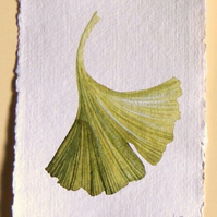 Original watercolour gingko painting