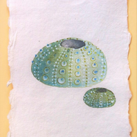 Sea urchins original watercolour paintin illustration