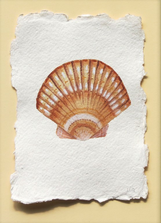 Scallop sea shell watercolour illustration painting