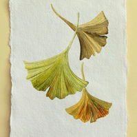 Gingko leaves trio original watercolour study illustration