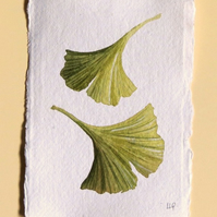 Gingko leaves original watercolour study illustration
