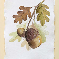 Acorns and oak leaves watercolour study painting illustration