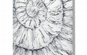 100 ammonites etching project
