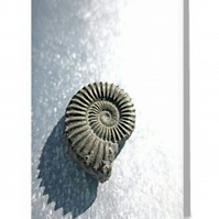 ammonite blank greeting card notelet notecard fossil spiral digital photograph