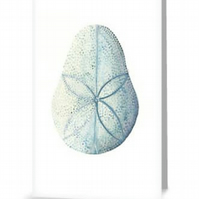 Sand dollar urchin blank greeting card, notelet, notecard, art card