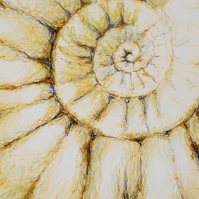 Mixed media ammonite fossil study closeup original art
