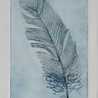 Original feather etching print First print in an edition of 65