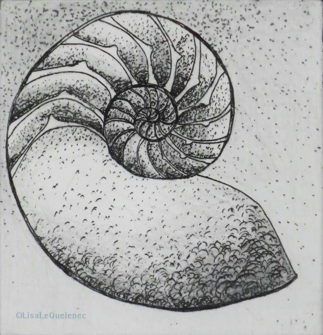 Chambered nautilus etching and mixed media art work